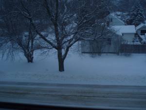 More Snow Feb 2019
