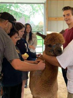 Alpaca Farm Days a