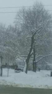 Jan 2020 snow